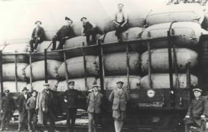 Prevoz baliranega hmelja na odkup v starih časih